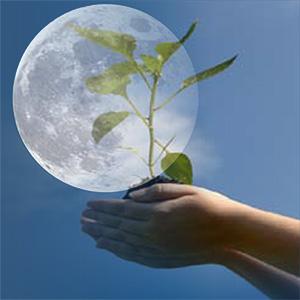 Лунный календарь огородника 2015-2016. Лунный посевной календарь садовода огородника 2015 года